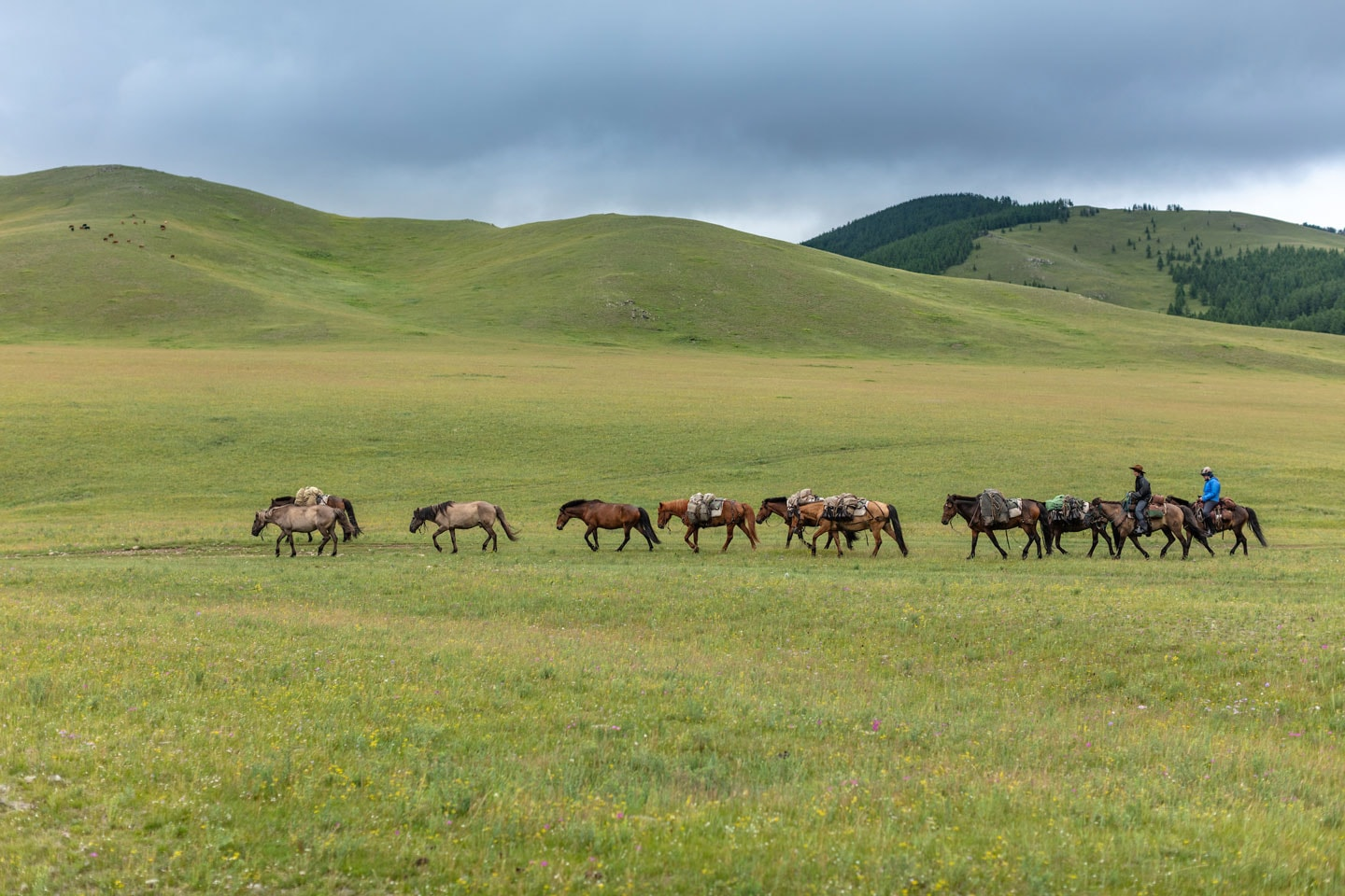 stonehorse horsetrail expedition mongolia